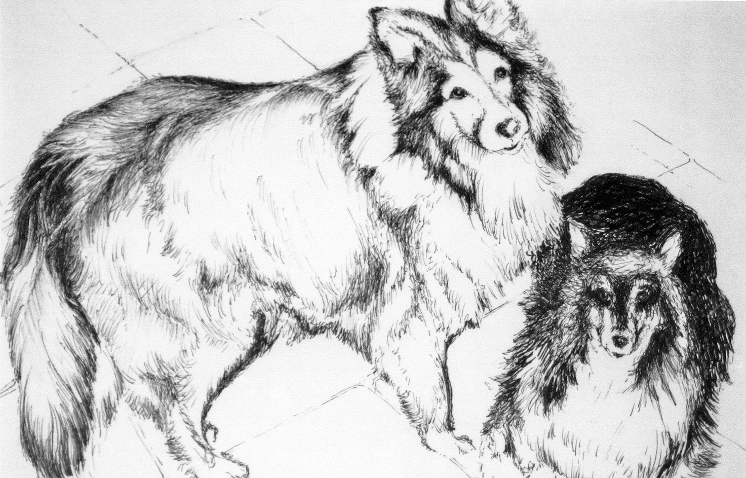 Two Dogs – ink pen on paper