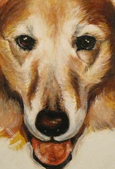 Collie – oil painting